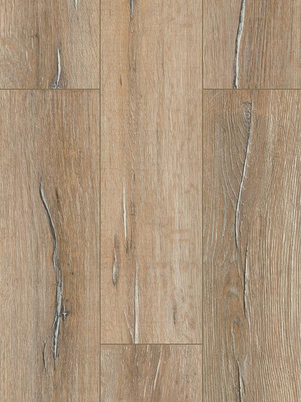 FP561 Livingston Oak