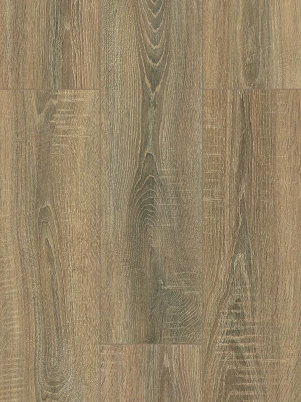 FP562 Bering Oak